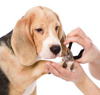 Dog grooming dog self wash dog shop and dog daycare at k 9 to five dog day care and dog grooming at k 9 to five vancouver wa solutioingenieria Choice Image