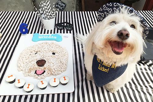 Premier Dog Birthday Party 150