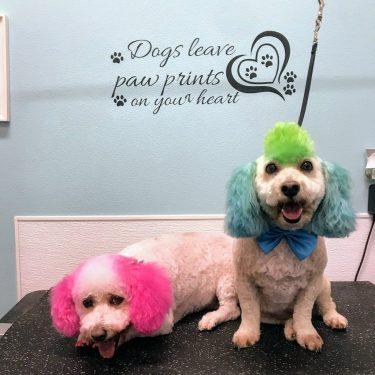 Dog grooming dog self wash dog shop and dog daycare at k 9 to five dog hair dye dog grooming k 9 to five vancouver wa solutioingenieria Choice Image