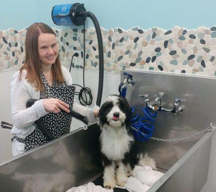 Dog grooming dog self wash dog shop and dog daycare at k 9 to five dog self wash dog day care and dog grooming at k 9 to five vancouver wa solutioingenieria Choice Image
