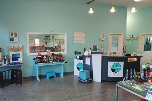 K 9 to five dog day care dog grooming dog self wash dog shop dog storenatural dog treatsk 9 to five solutioingenieria Image collections