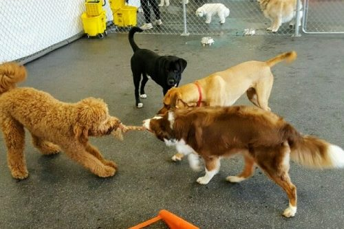 K 9 to five dog day care dog grooming dog self wash dog shop k 9 to five dog day care camas washington solutioingenieria Image collections