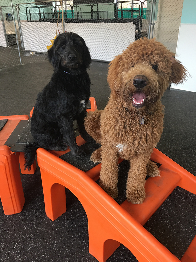 Dog daycare vancouver wa best dog 2017 dog grooming self wash and daycare at k 9 to five solutioingenieria Images